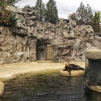 Brookfield Zoo Pinniped Point, GLCT, Риверсид