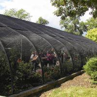 Brookfield Zoo Butterflies!, GLCT, Риверсид