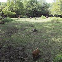 Brookfield Zoo Habitat Africa!, GLCT, Риверсид