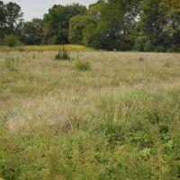 Prairie, Near Edwardsville, IL, Роксана