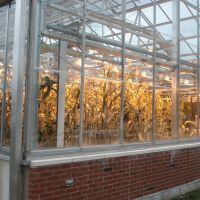 Greenhouse, University of Illinois, Урбана