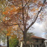 Autumn at Axiom, Урбана