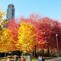Millennium Park - Autumn colors, Чикаго