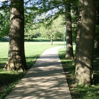 Tree walkway, Блумингтон