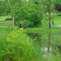 DSC08185  The Pond 6/10/06 - S view, Брук