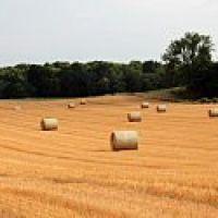 New Carlisle Countryside, Брук