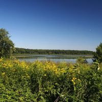 Long John Slough in Willow Springs, Illinois, Брук