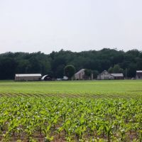 New Corn, Мадисон
