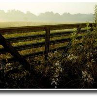 An early morning summer dew - 199007, Меридиан Хиллс