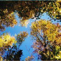 fall colored trees, Азуса