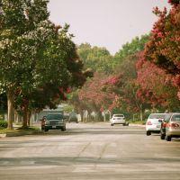 Sycamore Drive, Альгамбра