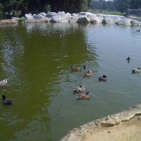 阿尔曼索公园里的池塘, Альгамбра