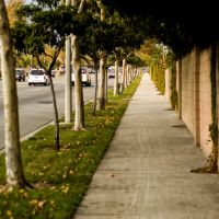 City Sidewalk and Trees, Апленд