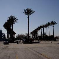 Palm Trees - Santa Anita Park, Arcadia, CA,USA, Аркадиа