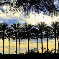 Santa Anita Park • More Palms • Arcadia, Аркадиа