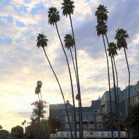 Palms • 1, Аркадиа