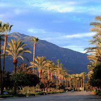 Santa Anita Park • Looks E. at San Gabriel Mtns. • Arcadia, Аркадиа
