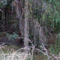 Gardena Willows, Gardena, CA, Гардена