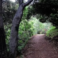 TOYON TRAIL, SOUTH HILLS - GLENDORA, Глендора
