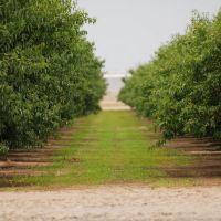 Almond Farm, Дели