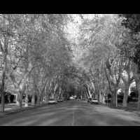 Sierra Lane, Дели