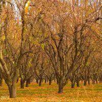 Modesto-Orchard, Дель-Ри