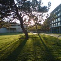 Sunset, UC Davis, Дэвис
