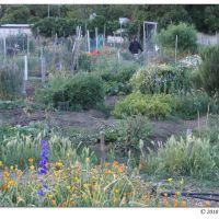 Garden, Дэвис