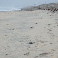 Imperial Beach, San Diego (Tijuana Sloughs), Империал-Бич