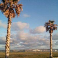 Palms, Империал-Бич