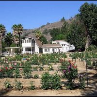 Love House Dahlias, Каситас-Спрингс