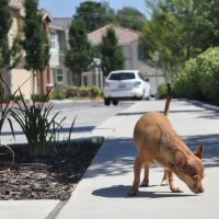 walking the dog, Конкорд