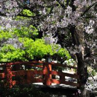 Japanese Garden, Ла-Канада