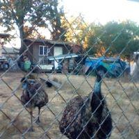 Emus Place, Лемон-Гров