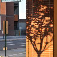 Shadow, Ливермор
