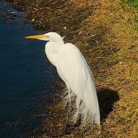 V A BIRDS - VA Hospital Loma Linda, Ca. 2/16/12, Линда