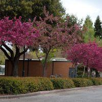 Rengstorff park spring 2, Лос-Альтос