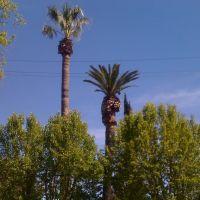 The Orchard-Los Gatos, Лос-Гатос