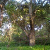 Blueberry Hill Oaks, Лос-Гатос