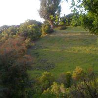 Manzanita Hill, Лос-Гатос
