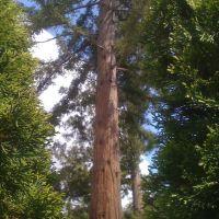 Redwoods-Los Gatos, Лос-Гатос
