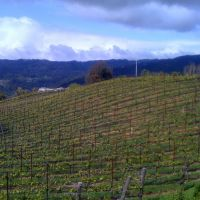 Los Gatos-Hillside vineyard, Лос-Гатос