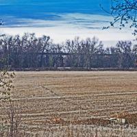 District 10 rice field, Марисвилл