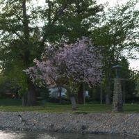 Blossoming tree at Ellis Lake Springtime, Марисвилл
