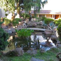 Koi pond at the Marysville Buddhist Church. 125 B St., Marysville, California, Марисвилл