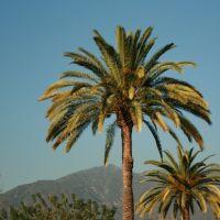 Palms over Monrovia, Монровиа