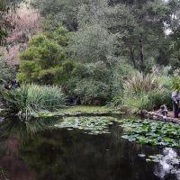 Japanese Garden, Монтроз