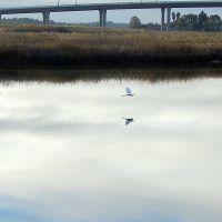 white crane at dawn, imola ave, Напа