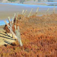 Fence in Rush Creek Marsh, Новато