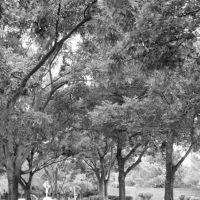 Sierra Creek Park, Норт-Хайлендс